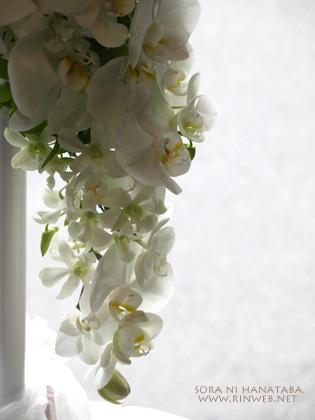 胡蝶蘭のセミキャスケードブーケ@東京都文京区椿山荘へお届け/柏市 花屋空に花束