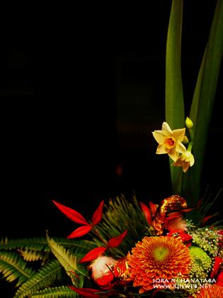 水仙、すぅっっと。お正月飾りアレンジメント