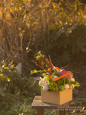 食堂の開店お祝い花@仙台市へお届け