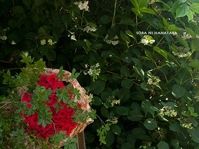 41歳のお誕生日/毎年お届けできております奥様へ贈られる赤いバラの花束を