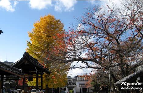 本隆寺の黄葉
