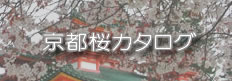 京都桜開花情報