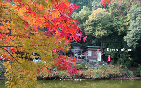 御髪神社の紅葉