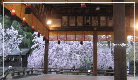 平野神社 桜 2008