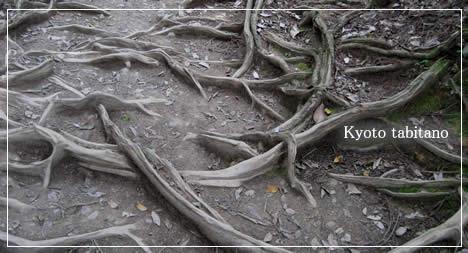鞍馬寺 木の根道