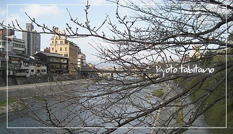 鴨川の桜2009