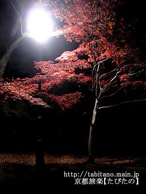 京都御苑 紅葉