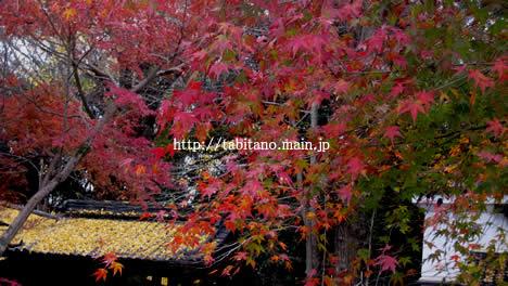 梨木神社 紅葉