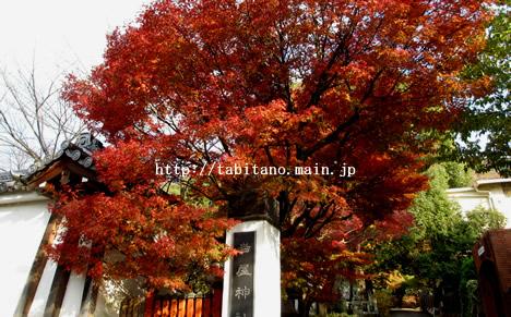 岩屋神社 紅葉