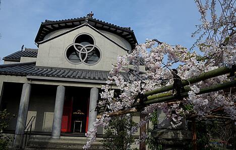 十念寺 桜