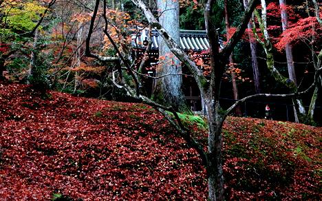 今熊野観音寺 紅葉