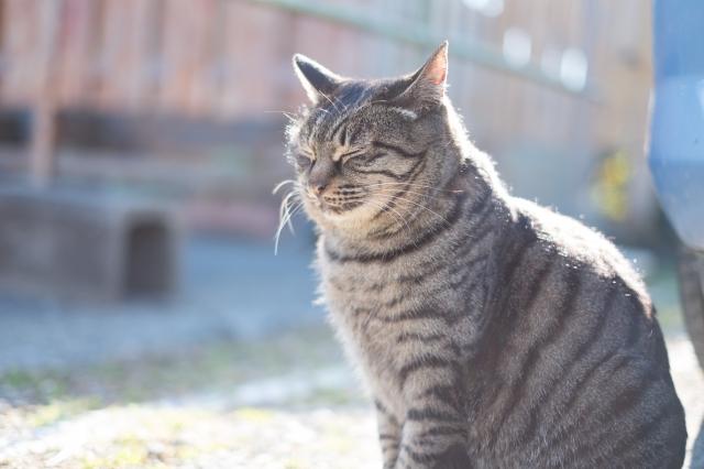 小湊鐵道養老渓谷駅の猫駅長