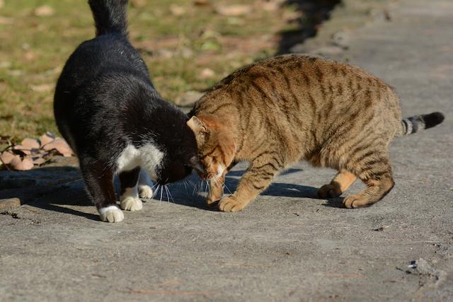 猫が頭突きしてきたかと思えば激しいスリスリをする意味とは   教えてハナ先生!猫の飼い方しつけ通信