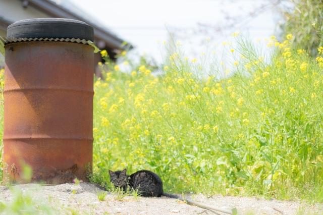 小湊鐵道 猫駅長