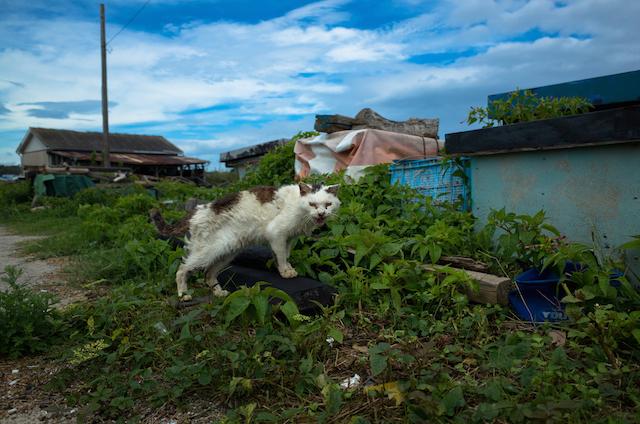 城ヶ島の猫