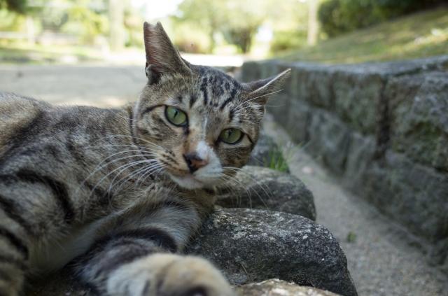 大阪府堺市の猫