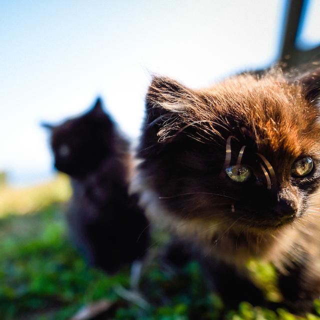 宮城県 石巻 田代島の猫