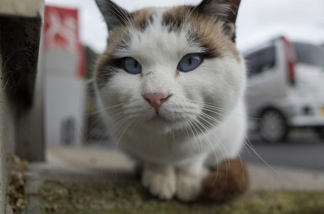 滋賀県近江八幡の猫 堀切港