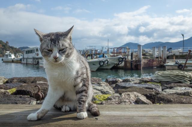 滋賀県 沖島の猫