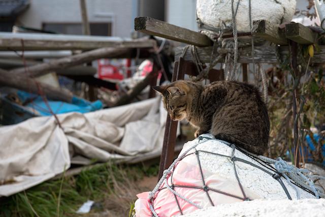 兵庫県 淡路島の猫