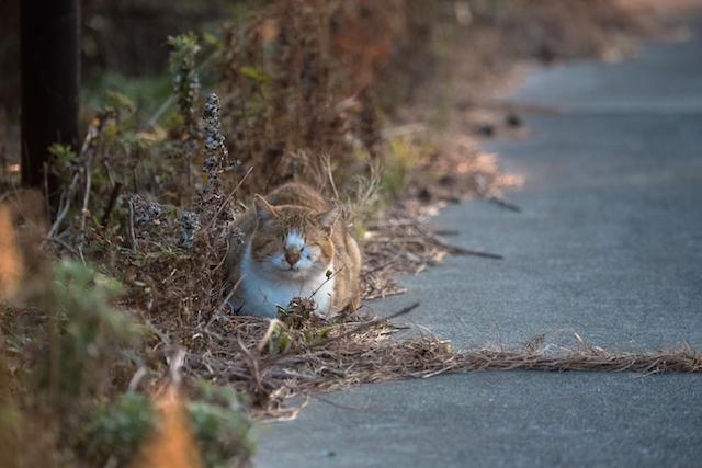 兵庫県 沼島の猫