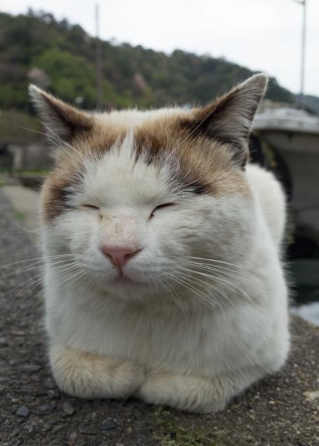 滋賀県 近江八幡の猫