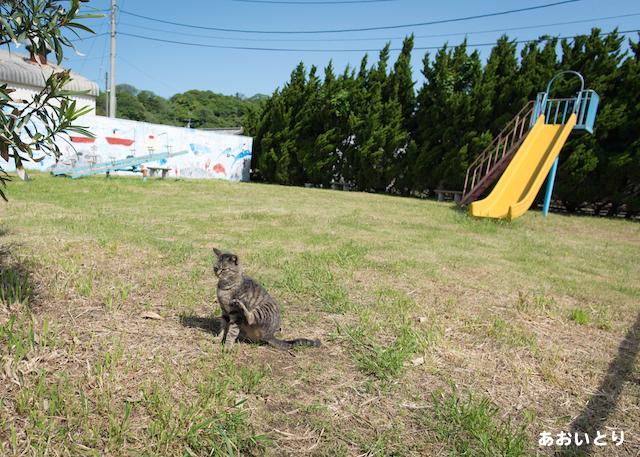 福岡県 相島の猫