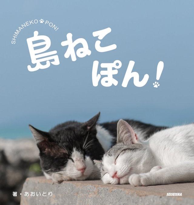 hyousi_shima のコピー 2.jpg