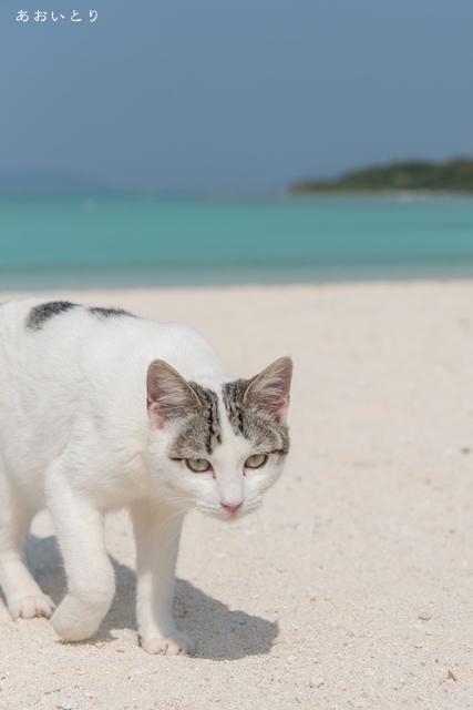 沖縄県竹富島コンドイビーチ