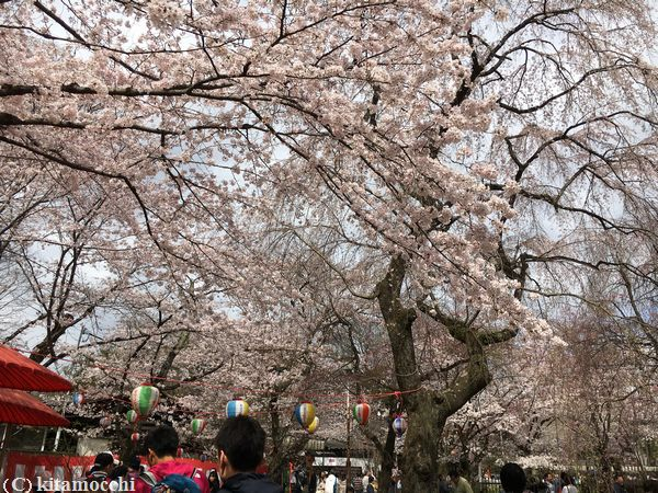 平野神社hiranoshrine9.jpg