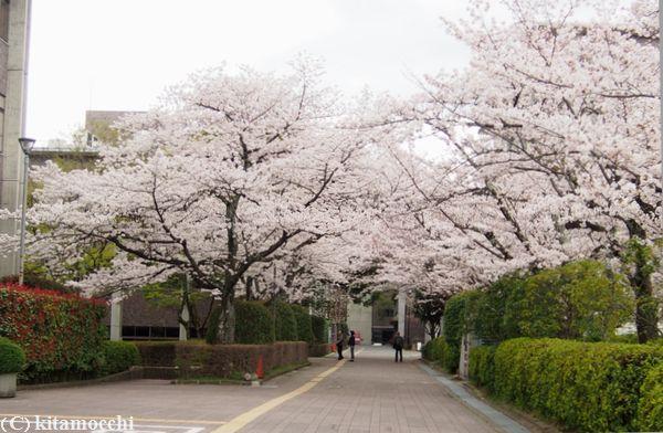 立命館大学RitsumeikanUniversity1.jpg
