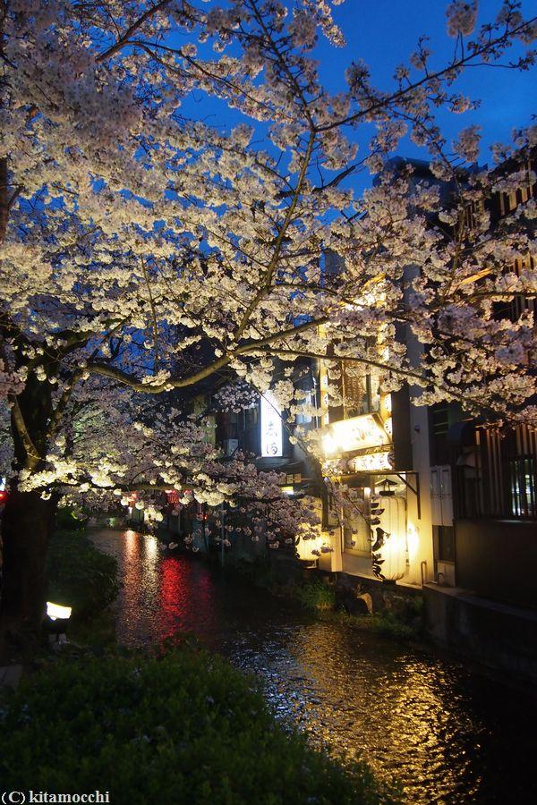 高瀬川の桜2.jpg