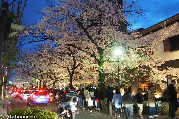 高瀬川の桜3.jpg