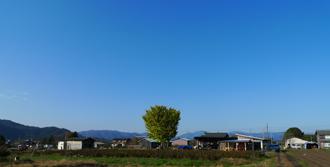 【ソラノネ】銀杏の木が素敵なソラノネ食堂