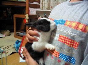 ウサギのマリー