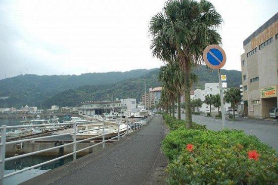 ヤシノキとハイビスカス街路樹.jpg