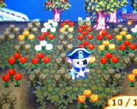 トホホ・・・枯れちゃった花たち