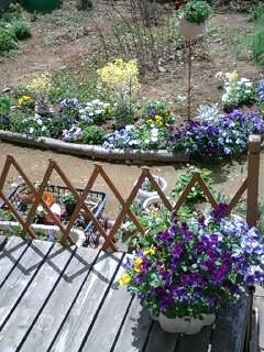 宿根草の庭