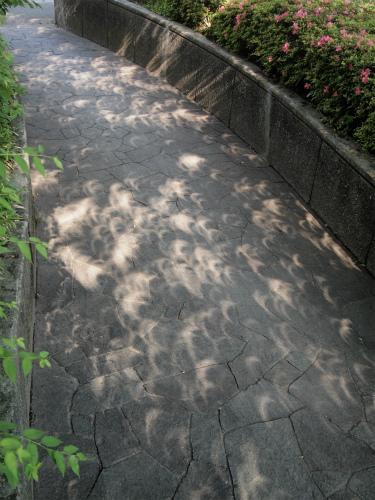 日食時の木漏れ日