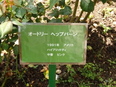P5040036.JPG