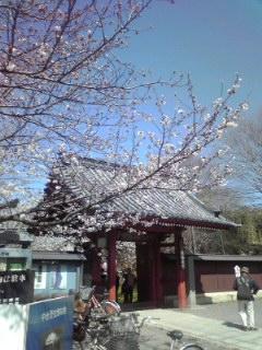 桜と称名寺