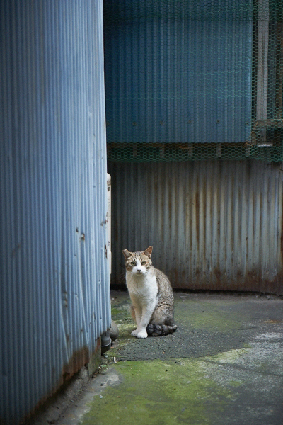 裏道のネコ
