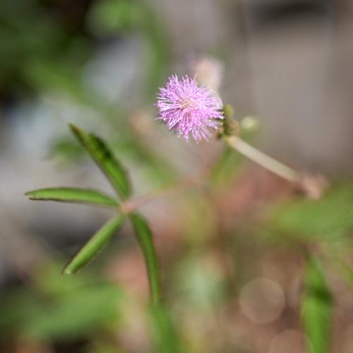プランター植物