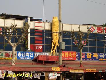 korea22