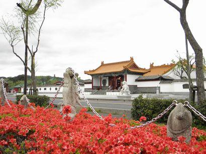中国庭園燕趙園のキリシマツツジ