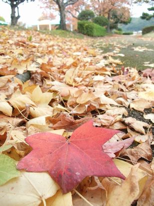 【湯梨浜町】東郷湖羽合臨海公園の紅葉