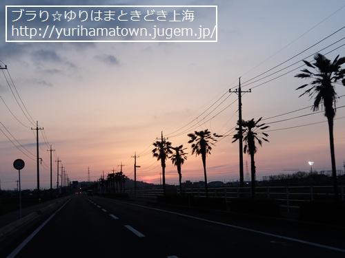 【湯梨浜町】夕日色ハワイロード