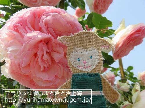【湯梨浜町】Rose Garden