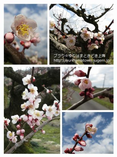 【湯梨浜町】野花豊後の花を楽しんだ...