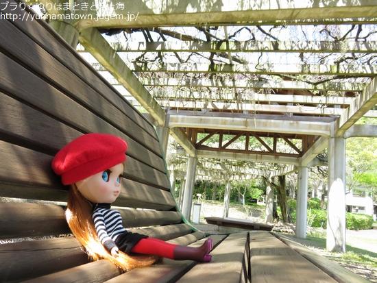 【湯梨浜町】紫色の藤カーテンを楽しむ!!あやめ池公園
